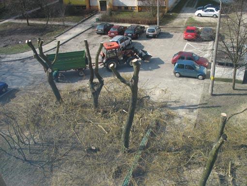 Wiosenne przycinanie drzew pod blokiem.